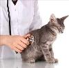 Ветеринарные клиники в Емельяново